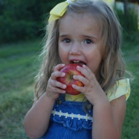 Eating apples at Sunrise Orchards