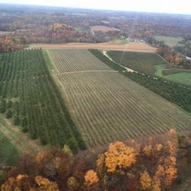 Helicopter view of orchards over Sunrise Orchards