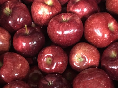 Wisconsin Red Delicious